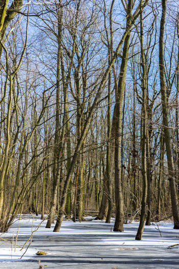 Winter forrest near Berlin Bare Tree Beauty In Nature Branch Cold Temperature Day Nature No People Outdoors Scenics Sky Snow Tranquility Tree Winter