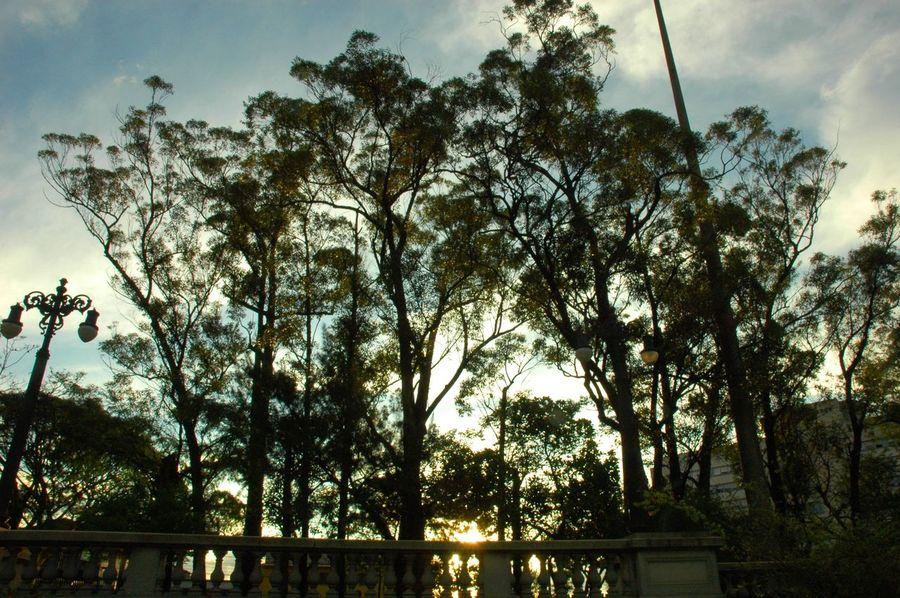 Museu Do Ipiranga Afternoon Trees Nature