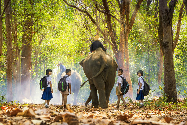 Men riding elephants amidst students walking in forest