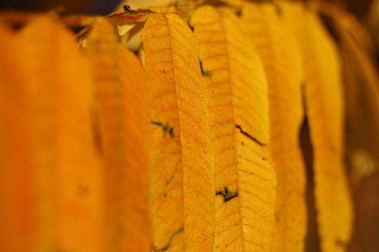 Close-up of orange leaf