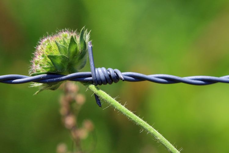 Close-Up Of Barbed Wire Against Flower