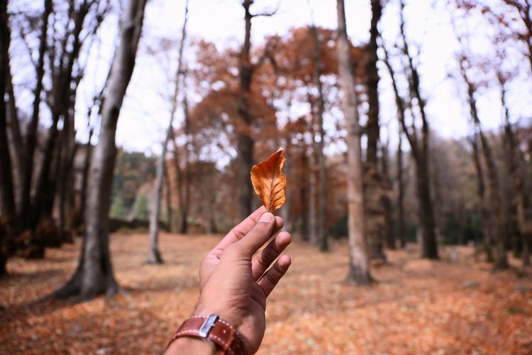 Cropped image of man holding leaf against trees at forest