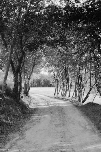 Tree The Way Forward Nature Road Tranquility Beauty In Nature Tranquil Scene No People Landscape Scenics Outdoors Day Branches EyeEm Catalunya Atmosphere EyeEm Gallery Full Frame Tranquility Nature Tree Llerona