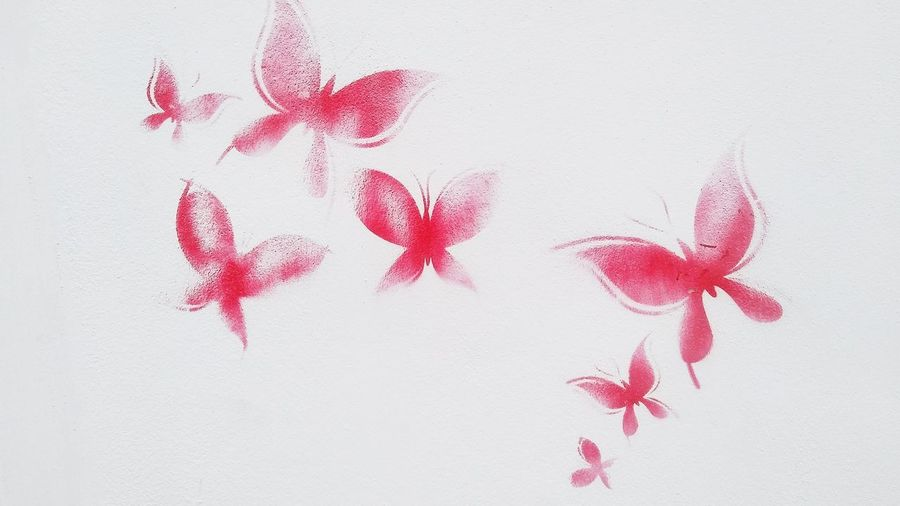 Close-up of red flowers against white wall