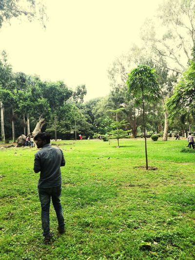 Tree Men Sky Grass Green Color