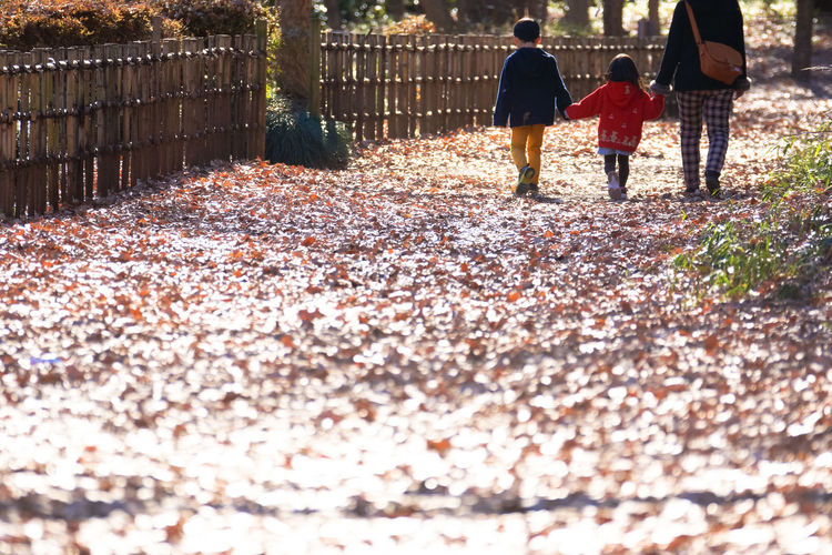 Rear View Of People Walking On Autumn Leaves