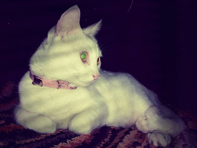 Night vision Home Is Where The Art Is Home Is Where My Cat Is Cats Catoftheday Caturdayeveryday Cat Photography Cat Lovers Cats Of EyeEm Princess Cute So Cute :) Kittens Kittenoftheday Home Sweet Home Dim Light Shadowplay Night Photography
