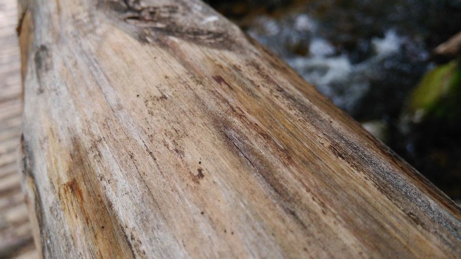 Wood... love wood Backgrounds Brown Close Up Nature Close-up Closeup Day Detail Focus On Foreground Full Frame Natural Pattern Nature No People Outdoors Selective Focus Textured  Wallpaper Design Wallpaper For Mobile WallpaperForMobile Wallpapers Wood Wood - Material Wood Art Wood Textrure Wooden Texture Wooden Texture Background