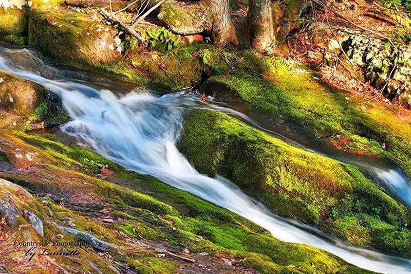Stokesstateforest Stokes Stream Tillmansravine