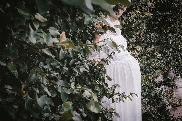 White flowering plants against trees
