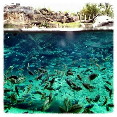Underwater Buschgardens Nature Florida P7taylor Epicearthco Seaworld Epic Landscape Fun Vacation