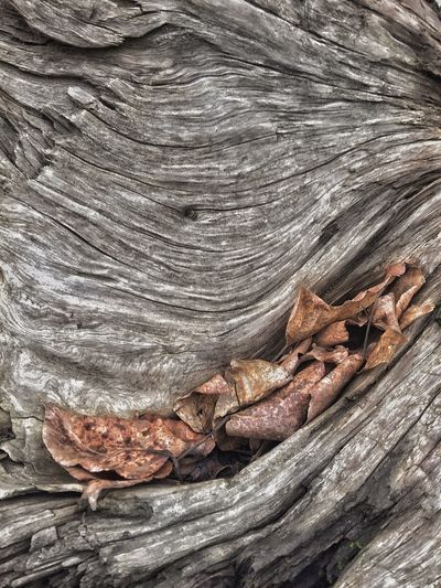 Curves Patterns In Nature Leaves Driftwood Surfaces And Textures Scenery Textured  Full Frame No People Pattern Close-up Backgrounds Day Nature Wood - Material Outdoors Natural Pattern Land Still Life Brown Tree Rough Tranquility Sunlight Sand