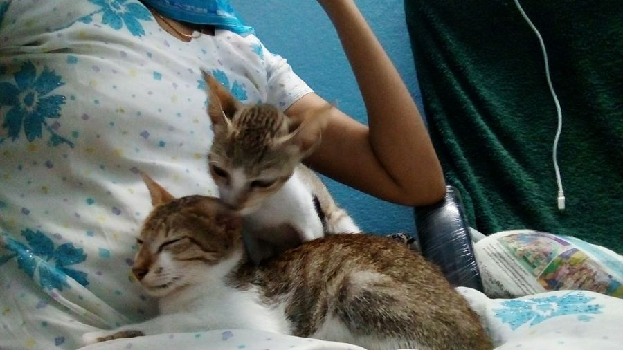 These boys compete to sit in my lap.. EyeEm Selects Domestic Cat Pets Domestic Animals Feline One Animal Indoors  Mammal Animal Animal Themes People Adult One Person Sitting Only Women Adults Only Bonding Friendship Animal Hospital Vet  One Woman Only Pet Portraits India