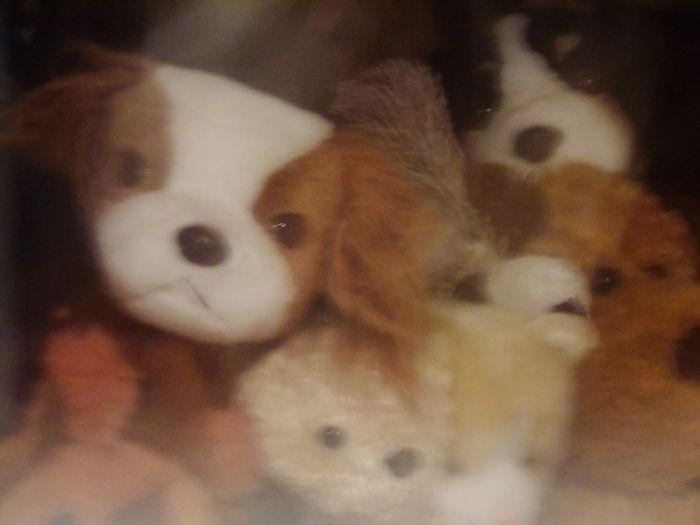 Soft Toys Tedddy Bears
