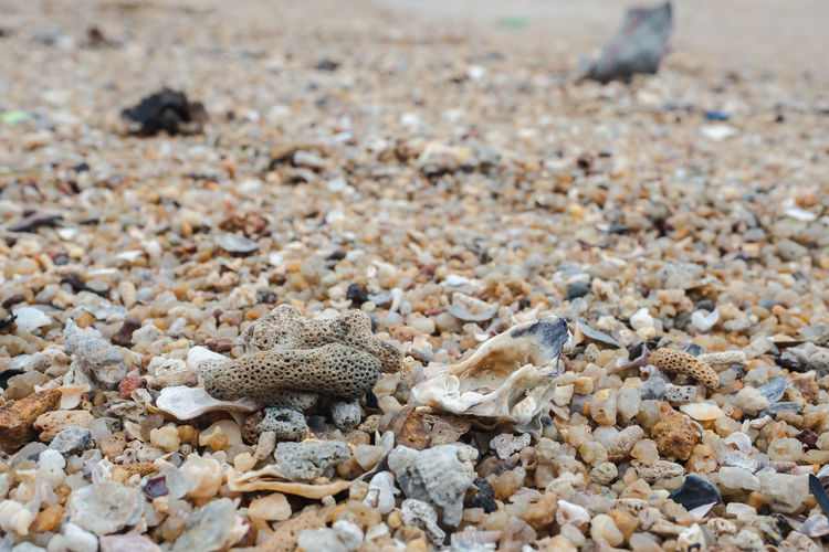 View of shells on sand