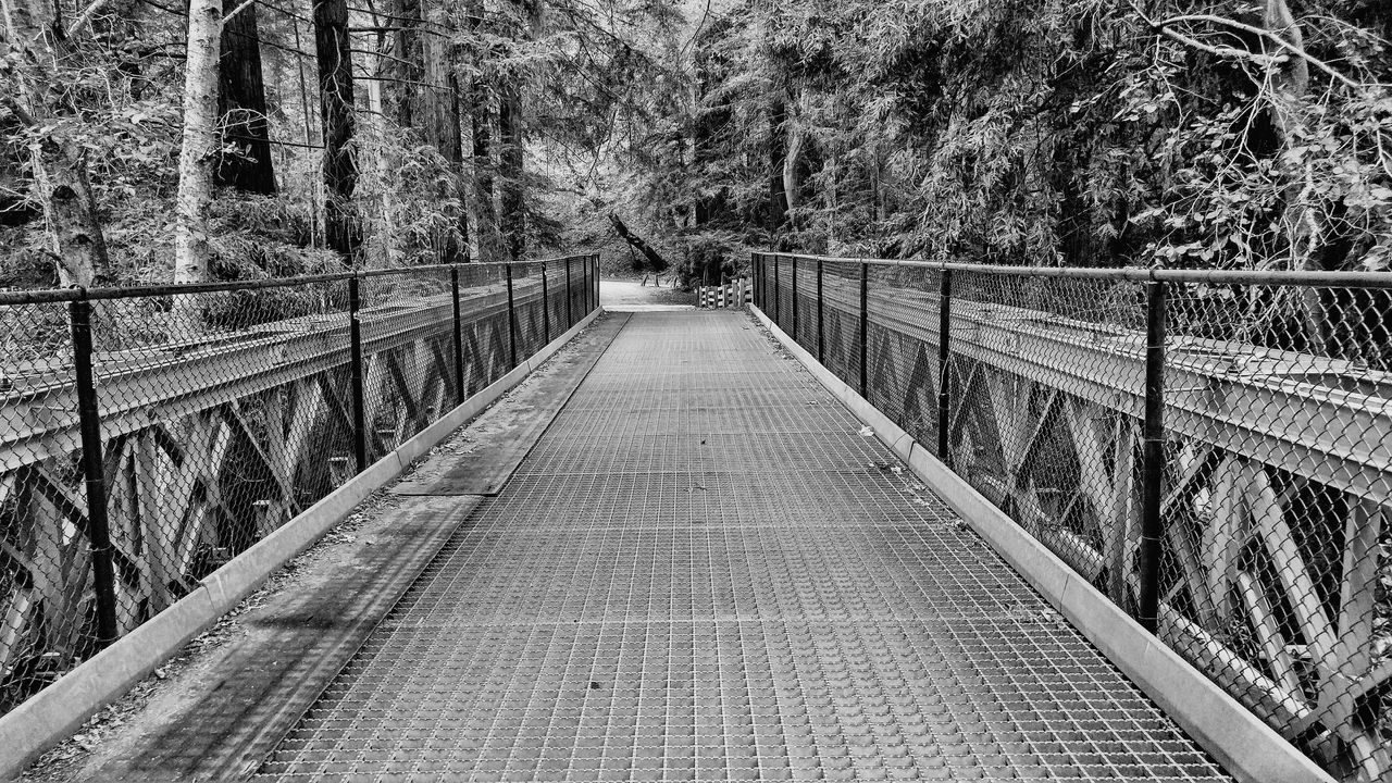 tree, railing, plant, connection, bridge, the way forward, direction, bridge - man made structure, footbridge, nature, transportation, no people, built structure, day, diminishing perspective, footpath, land, forest, outdoors, architecture, long