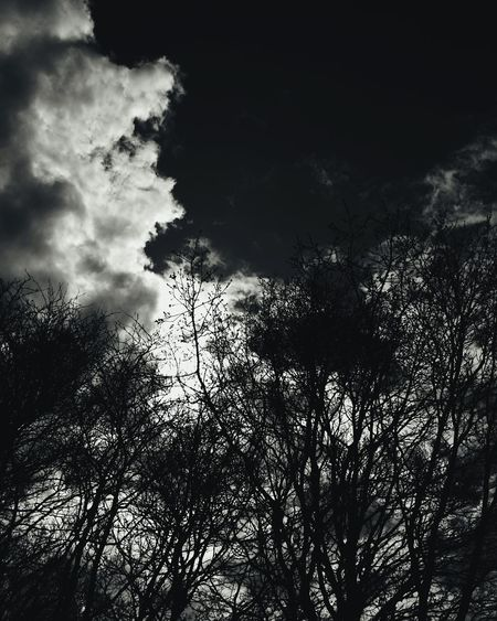 Tree Sky Nature Low Angle View Sunlight Cloud - Sky No People Sunbeam Silhouette Beauty In Nature Sun Outdoors Day