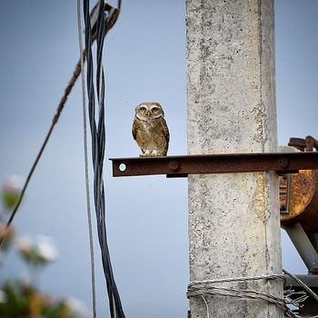 We were capturing other bird when this guy sat n watched us..