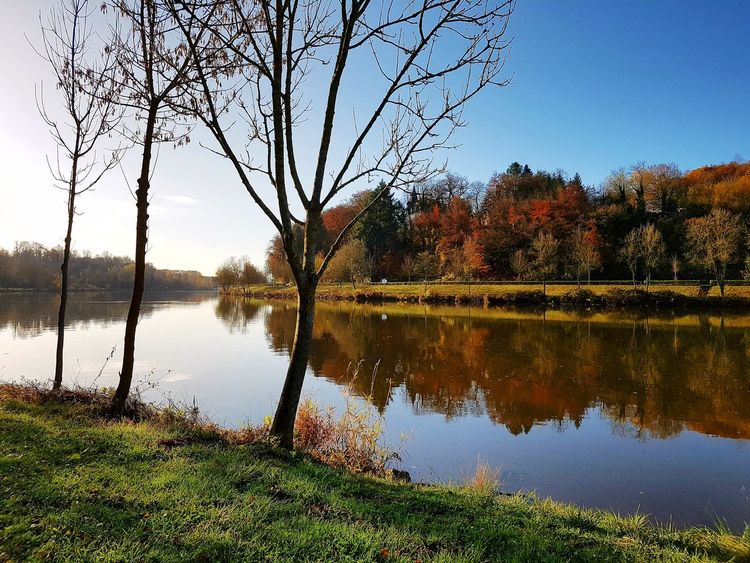 Water Reflection Tree Nature Outdoors Sky Beauty In Nature Scenics Day No People Grass Mosel Moselle Valley Mosel View