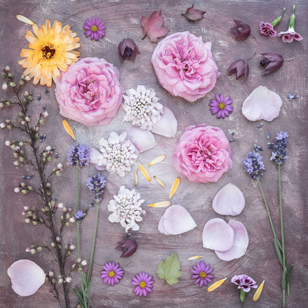 Garden moodboard in July Background Beauty In Nature Blossom Close-up Colorful Decoration Fine Art Photography Flower Flower Collection Fragility Garden Flowers Garden Photography Moodboard Petal Pink Color Roses Still Life Summer Pastel Colors