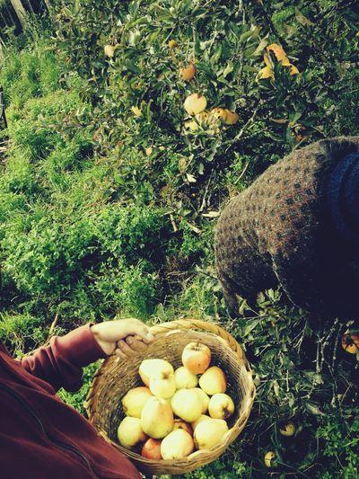 I'll fill my basket of apples. Taking Photos Hello World Relaxing Enjoying Life