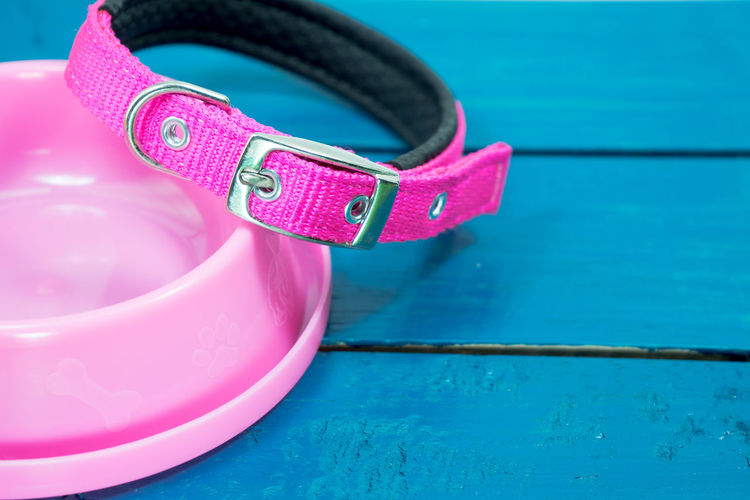 Pet collars and Bowls of pink on wooden background. Blue Bowls Close-up Collars Container Day Floating On Water Focus On Foreground High Angle View Indoors  Inflatable  Nature No People Personal Accessory Pet Accessories Pink Color Pool Protection Safety Security Still Life Swimming Pool Table Water