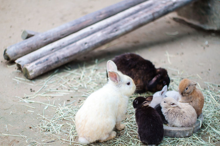 Animal Themes Black Brown Close-up Color Image Curiosity Cute Domestic Animals Eating Family Father & Son Father And Daughter Happy International Love Lovely Mother & Daughter Mother And Son Pets Rabbit Races Relaxing White Wood Zoology