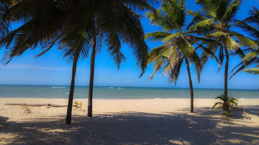 beach Tree Water Palm Tree Sea Beach Blue Sand Shadow Clear Sky Sky Coconut Palm Tree Coconut Palm Leaf Tropical Tree Tropical Climate Island Sand Dune