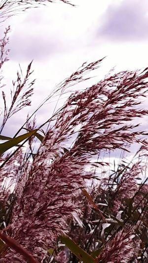 Purple Nature The Week On Eyem