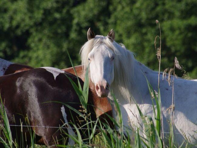 Horse Horses EyeEm Best Shots
