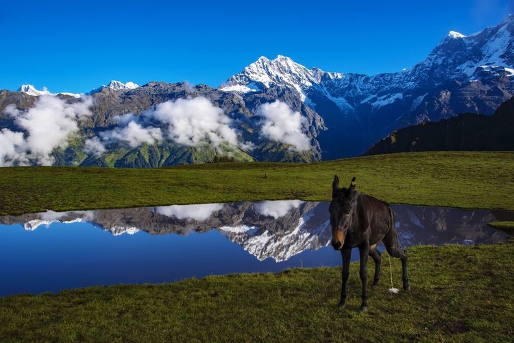 View of horse on field against mountain range
