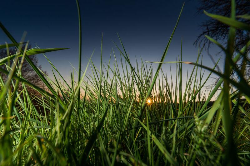 thru the grass