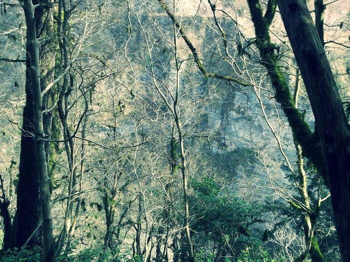 Тисо-самшитовая роща вид на реку хоста сквозь февральский тис и самшит сказка на яву