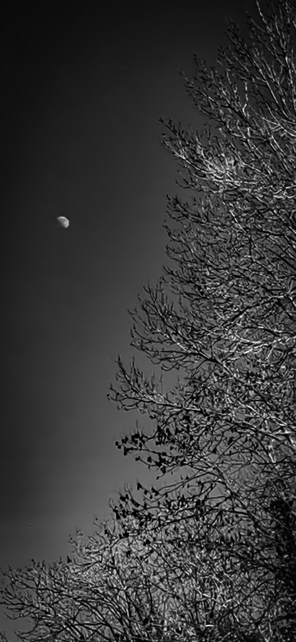 VIEW OF PLANT AGAINST MOON AT NIGHT