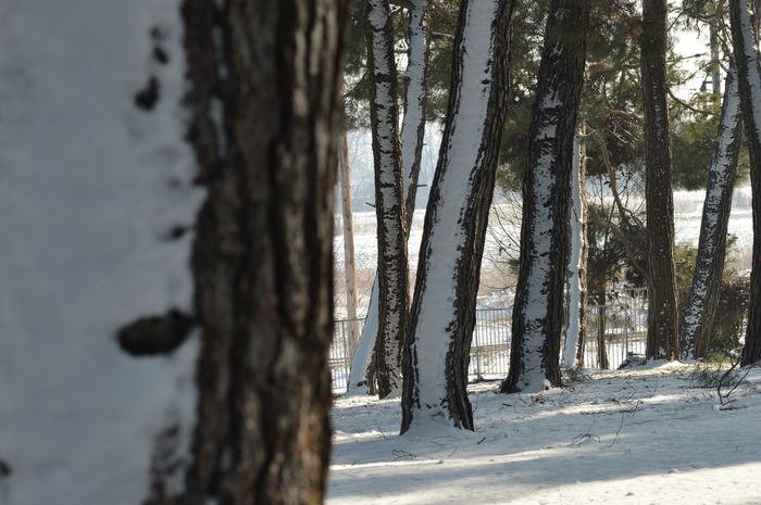Cold Temperature Snow Winter
