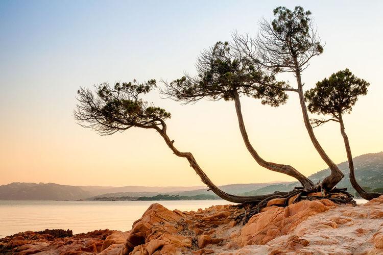 Scenic view of tree on coast