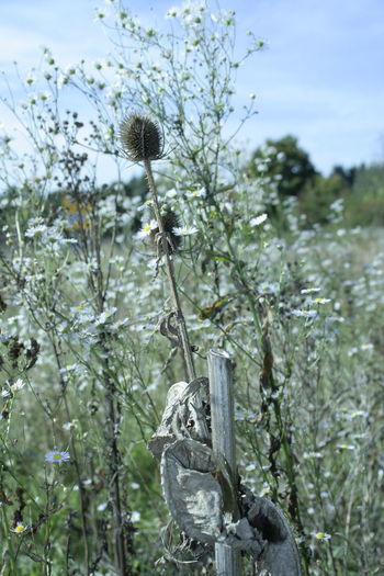 miracle of nature #art Of Nature #distel Nature Plant