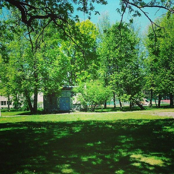 Nature Green Summertime