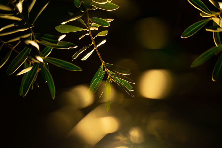 Plants in night time Growth Plant Plant Part Leaf Close-up Green Color Nature Beauty In Nature Selective Focus No People Day Outdoors Vulnerability  Freshness Focus On Foreground Fragility Tranquility Tree Plant Stem Sunlight Abstract Cinematography Cinematic Photography Low Light Photography Bokeh