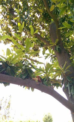 Nofilter Sunconure Aratinga MagnoliaTree