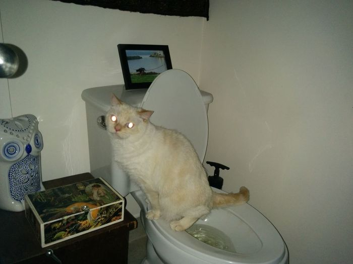 Kitty Bathroom Peeing My Cat Is Smarter Than Your Kid