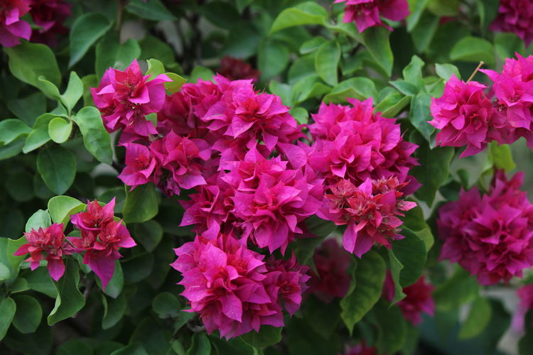 Beautiful Beauty In Nature Colours Flowers Green Color Nature Pink Pink Depth The Culture Of The Holidays
