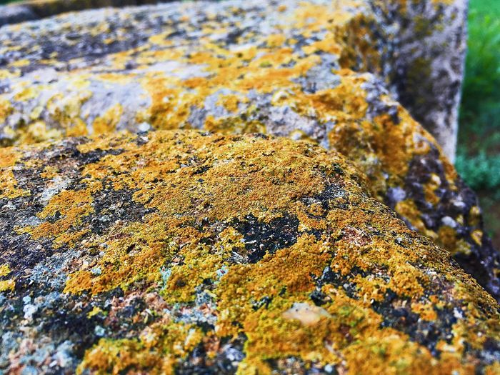 EyeEm Best Shots EyeEmBestPics EyeEm Nature Lover EyeEmNewHere Close-up No People Day Lichen Nature Moss Textured  Rock High Angle View Beauty In Nature Rough Focus On Foreground Outdoors Rock - Object Growth Land Pattern