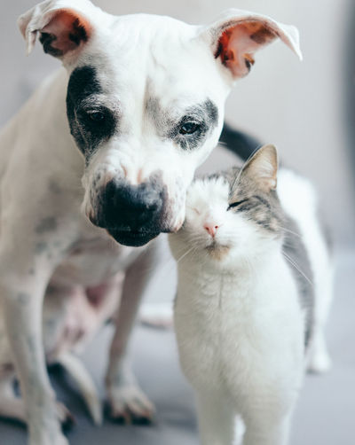 Friends Love Moment Animal Themes Cat Close-up Day Dog Domestic Animals Focus On Foreground Indoors  Looking At Camera Mammal No People One Animal Pets Portrait