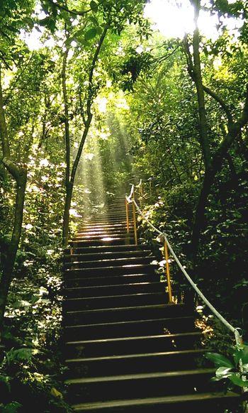 在陽光中前進 高雄市壽山 國家自然公園