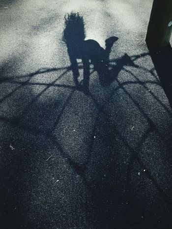 This Is Summer day 29. Hanging Out At The Park Hanging Around Shadow Upside Down