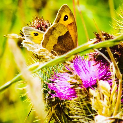 Butterfly Wildlife & Nature Wildlife Photography Beauty In Nature Outdoors Nature EyeEmSelect Plants Yellow White Red Blooming EyeEm Selects Springtime Bird Flower Perching Flower Head Insect Butterfly - Insect Camouflage Young Animal Close-up Plant Thistle Symbiotic Relationship Pollination Animal Antenna