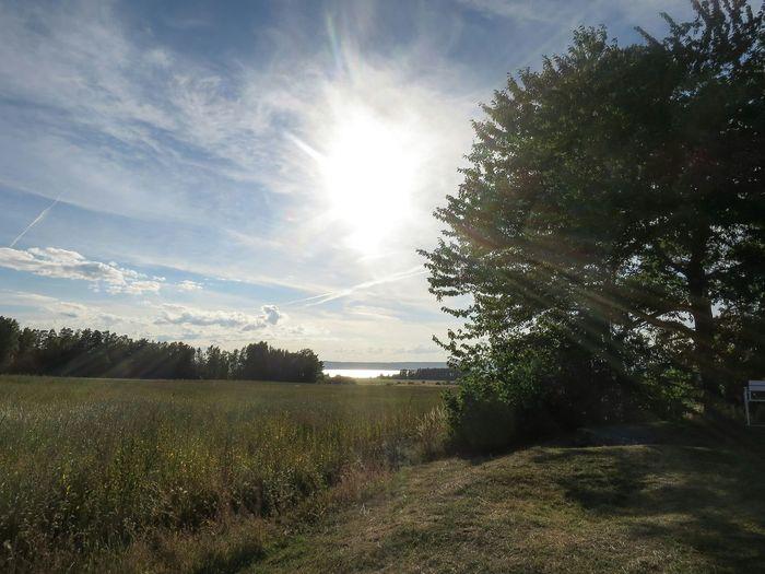 Landscape Stone Cist Historic Site Evening Sky Evening Light Tree