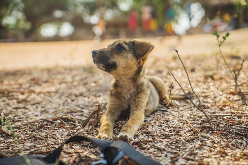 This cutie kept staring at him, so did I. Morondava, Madagascar. Dog One Animal Pets Animal Themes Domestic Animals Mammal Day Outdoors No People Nature Close-up Travel Travel Destinations Madagascar  Cute