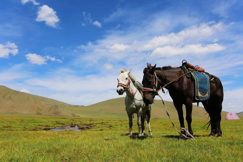 Trekking in the Arkhangai region of Mongolia. EyeEm Nature Lover Travel Photography Horses Landscape_Collection